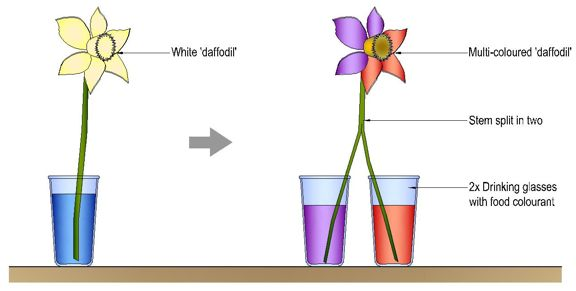 How Do Flowers Influence Natural Selection